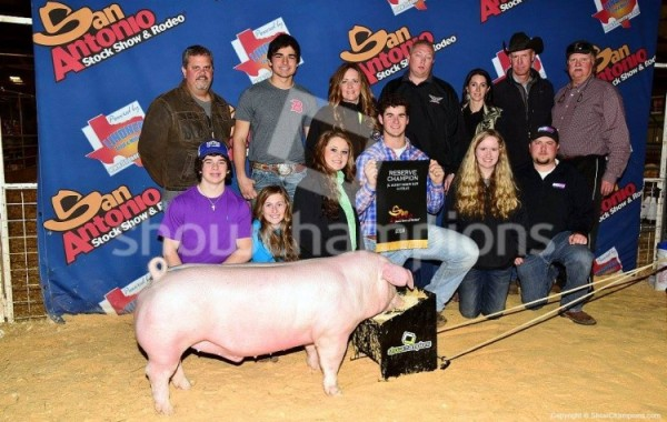 Reserve Champion Chester