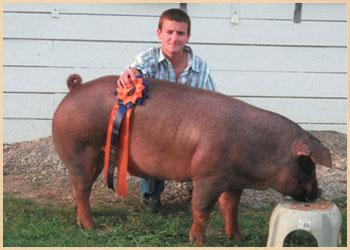 Champion Duroc Market Hog