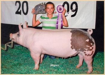 Division Champion Market Hog