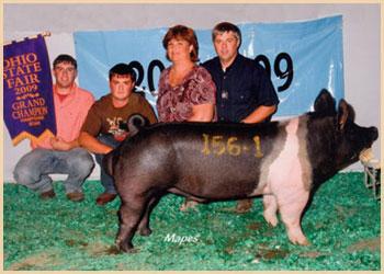 Grand Champion Hampshire Boar