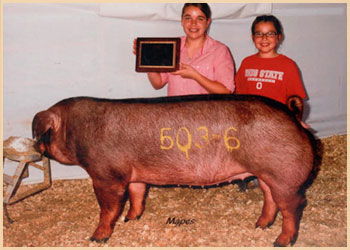 Reserve Champion Duroc