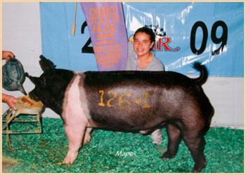 Reserve Champion Hampshire Boar