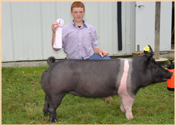 Reserve Champion Heavyweight Gilt