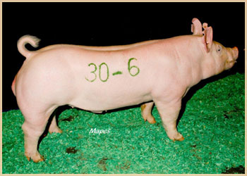 3rd Top Selling Gilt