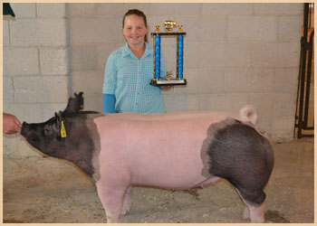 Champion Lightweight Gilt