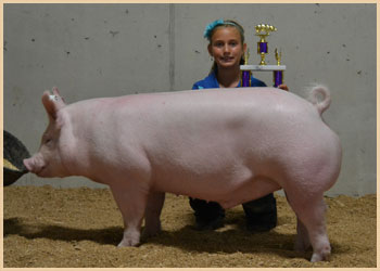 Reserve Champion Barrow Overall