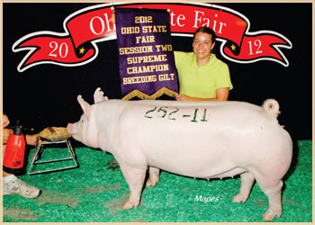 Supreme Champion Gilt