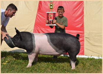Champion Jr. Showman