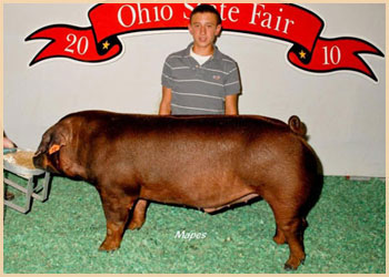 High Placing Duroc