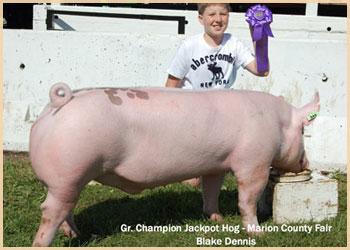 Grand Champion Jackpot Hog