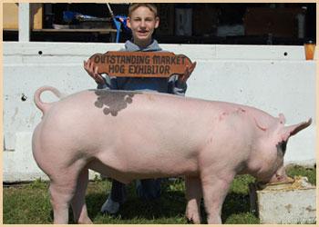 Outstanding Market Hog Exhibitor