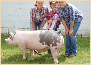 Reserve Champion Middleweight Barrow