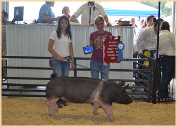 Reserve champion heavyweight  Champion Jackpot