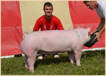 Reserve Jackpot Hog