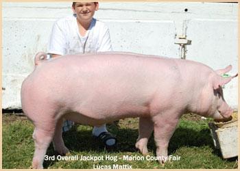 3rd Overall Jackpot Hog