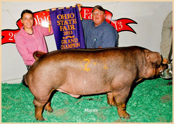 Grand Champion Duroc Boar