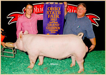 Grand Champion Yorkshire Boar