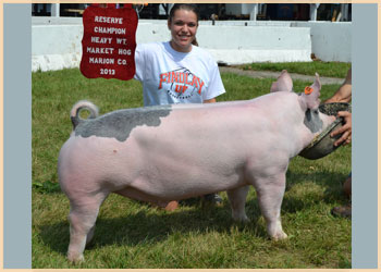 Reserve Champion Heavyweight Market Hog