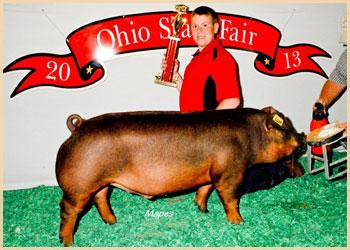 Reserve Champion Duroc MQP