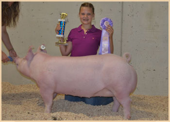 Reserve Champion Lightweight Gilt