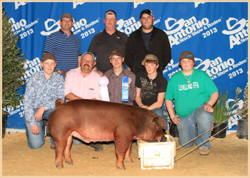 Reserve Champion Medium Weight Duroc