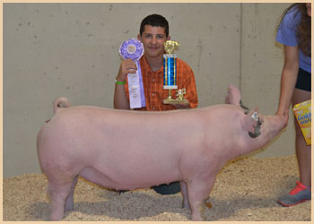 Reserve champion middleweight gilt