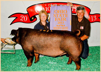 Reserve Grand Champion Duroc Gilt