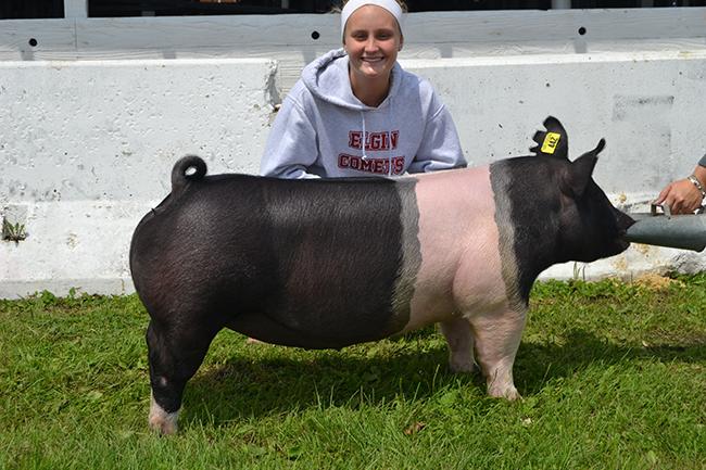 Reserve Champion Jackpot hog