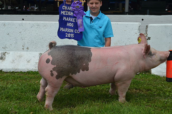 Champion Middleweight Market Hog