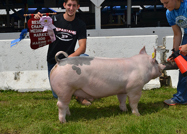 Reserve Champion Middleweight Market Hog