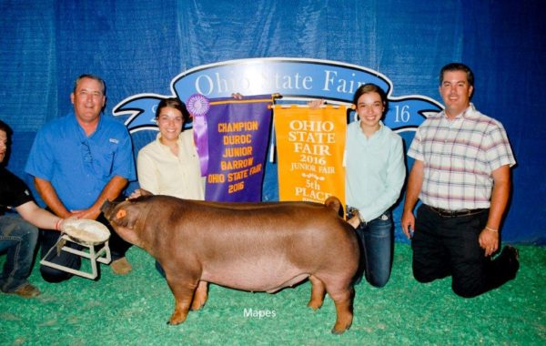 Champion Duroc Barrow & 5th Overall