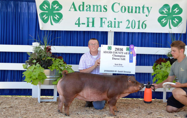 Champion Duroc Gilt
