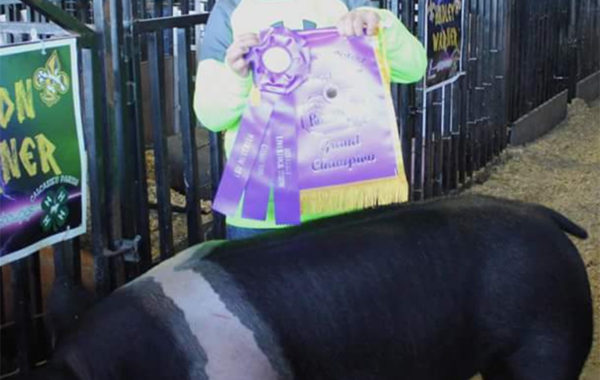 Grand Champion Hamp Breeding Gilt