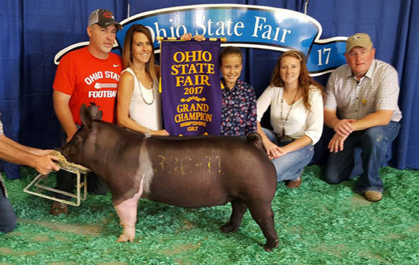Champion Hamp Gilt