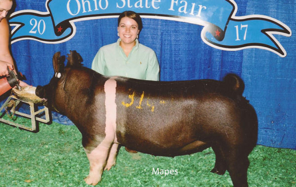 Class winning crossbred gilt