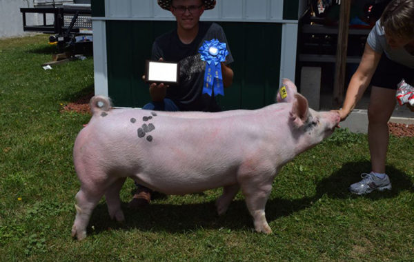 Reserve Lightweight Gilt