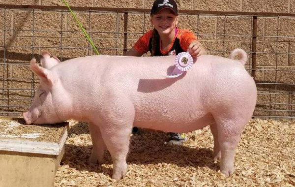 Reserve Breeding Gilt
