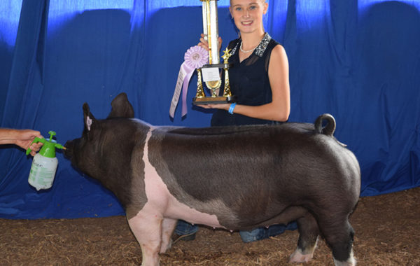 Reserve Champion Gilt