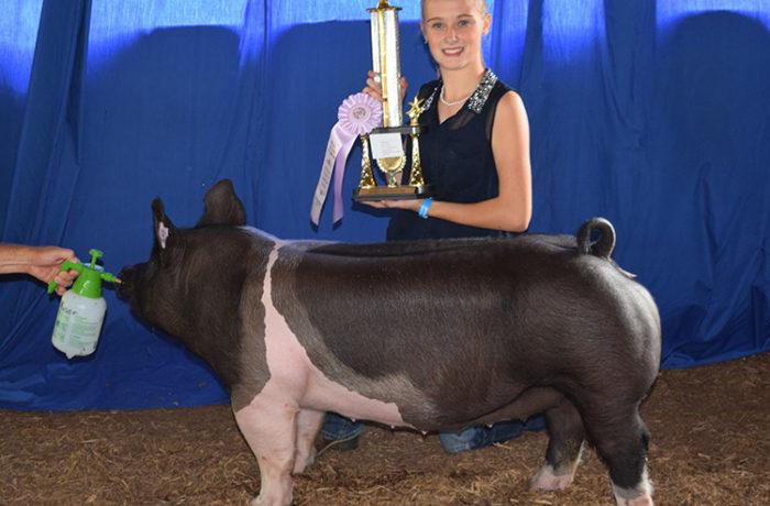 Reserve Champion Gilt