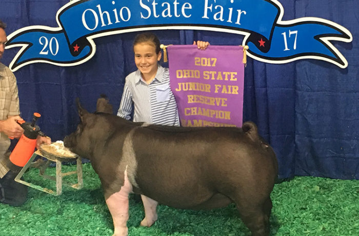 Reserve Champion Hamp Gilt